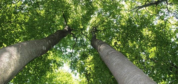 Drvo joga